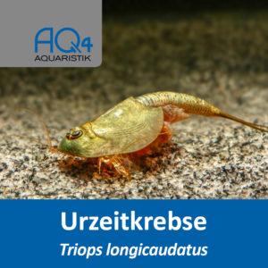 Triops longicaudatus