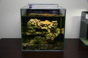Beispiel Aquarium halocaridina rubra 2