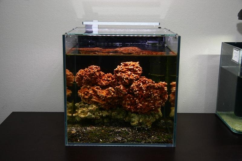 Brackwasseraquarium einrichten – für Halocaridina rubra