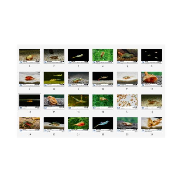 Monatskalender Urzeitkrebse Bilder 2019 2020