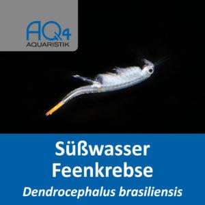 Dendrocephalus brasiliensis