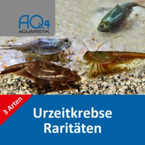 Triops-Raritaeten-Set