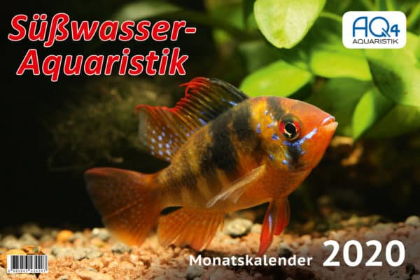 Süßwasser Aquarium - Kalender 2020 - Fische - Garnelen - Urzeitkrebse - Monatskalender