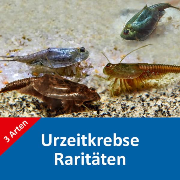 Triops Raritaeten Set