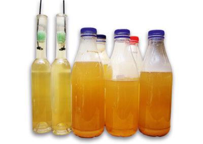 Essigälchen Flaschen