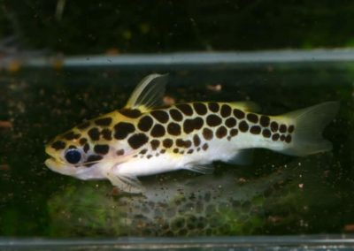 Weibchen2