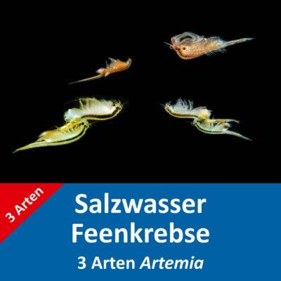Salzwasser Feenkrebse Eier – 3 Arten Artemia – mit Anleitung