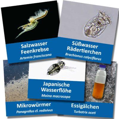 Lebendfutter für Aquarium Fische – Artemia + Essigälchen + Mikrowürmer + Wasserflöhe + Rädertierchen mit Anleitungen